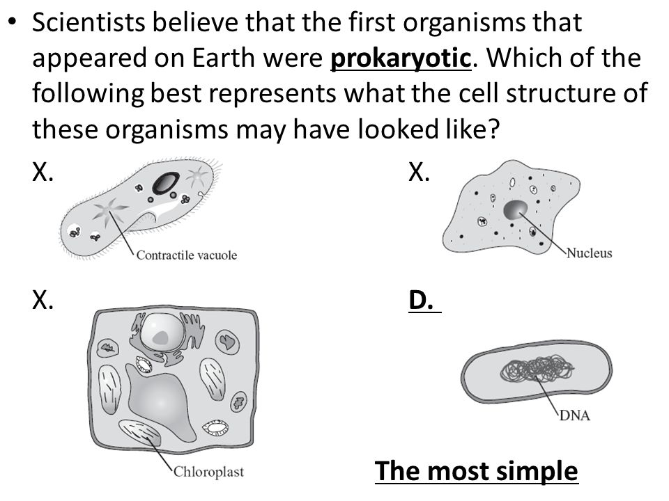 Scientists believe that the first organisms that appeared on Earth were prokaryotic. Which of the following best represents what the cell structure of