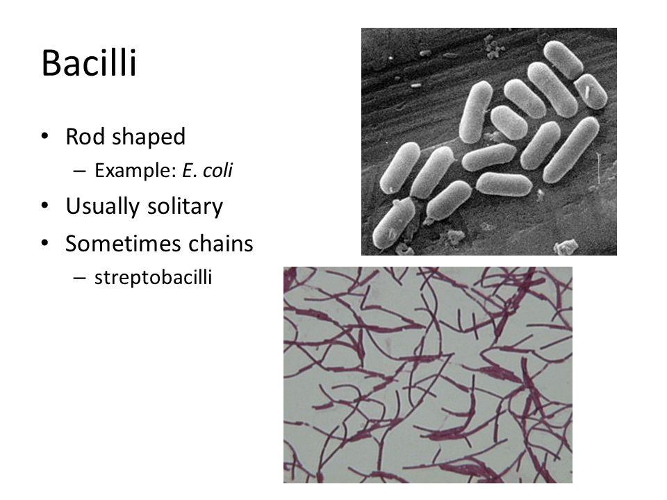 Bacilli Rod shaped – Example: E. coli Usually solitary Sometimes chains – streptobacilli