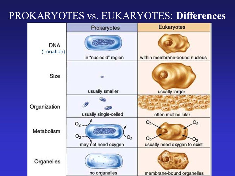 PROKARYOTES vs. EUKARYOTES: Differences (Location)