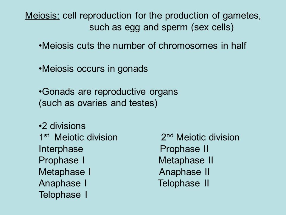 Meiosis: cell reproduction for the production of gametes, such as egg and sperm (sex cells) Meiosis cuts the number of chromosomes in half Meiosis occ