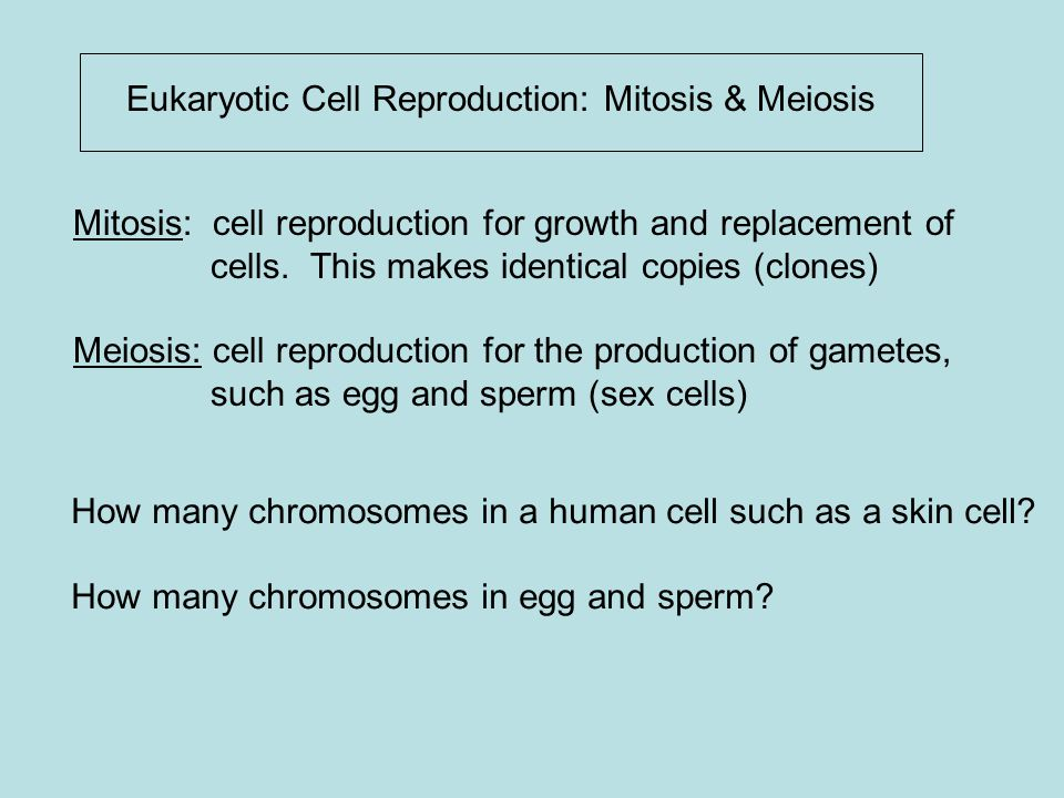Eukaryotic Cell Reproduction: Mitosis & Meiosis Mitosis: cell reproduction for growth and replacement of cells. This makes identical copies (clones) M