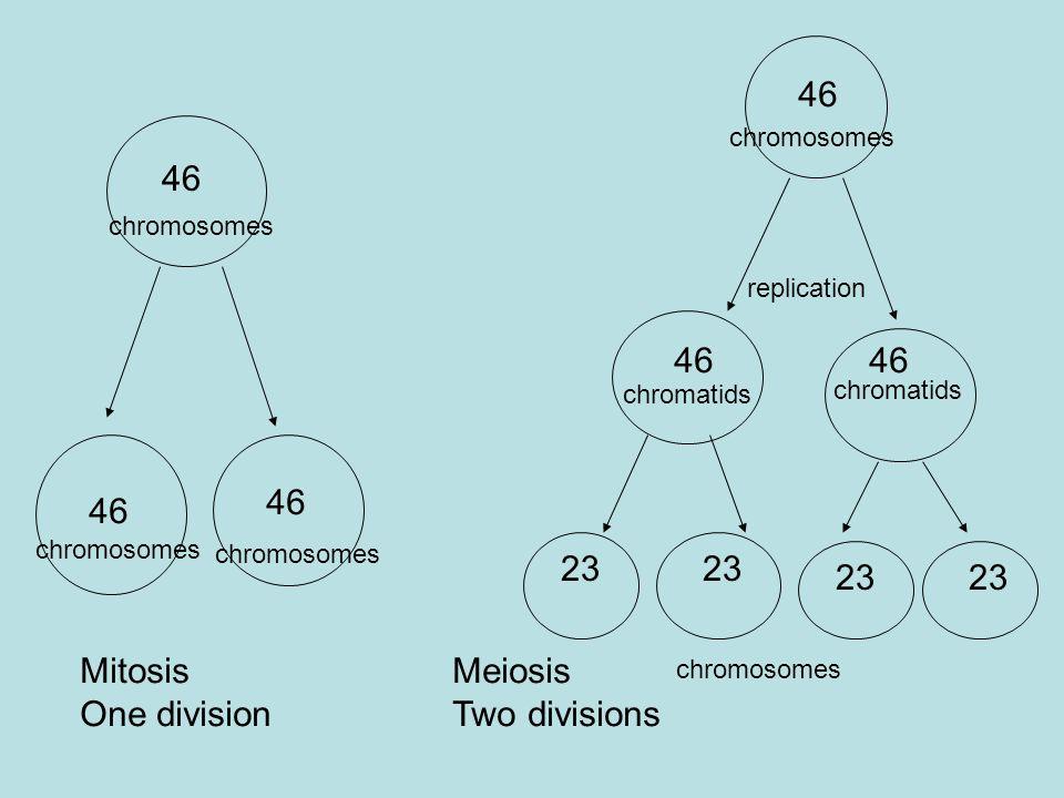 46 Mitosis One division 46 chromosomes replication chromatids chromosomes 23 chromosomes Meiosis Two divisions