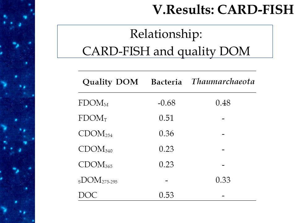 Results Relationship: CARD-FISH and quality DOM V.Results: CARD-FISH Quality DOMBacteria Thaumarchaeota FDOM M -0.680.48 FDOM T 0.51- CDOM 254 0.36- CDOM 340 0.23- CDOM 365 0.23- S DOM 275-295 -0.33 DOC0.53-
