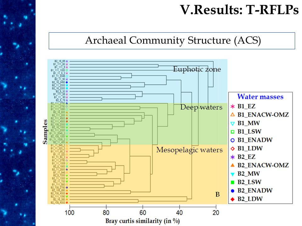 Archaeal Community Structure (ACS) Results Euphotic zone Deep waters Mesopelagic waters V.Results: T-RFLPs