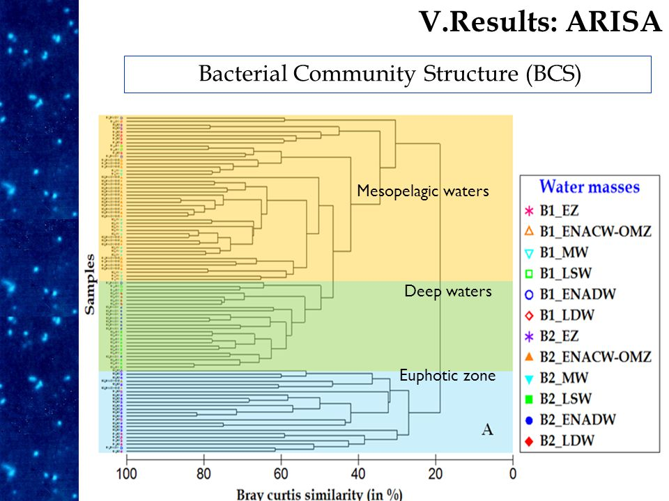Euphotic zone Deep waters Mesopelagic waters Bacterial Community Structure (BCS) V.Results: ARISA