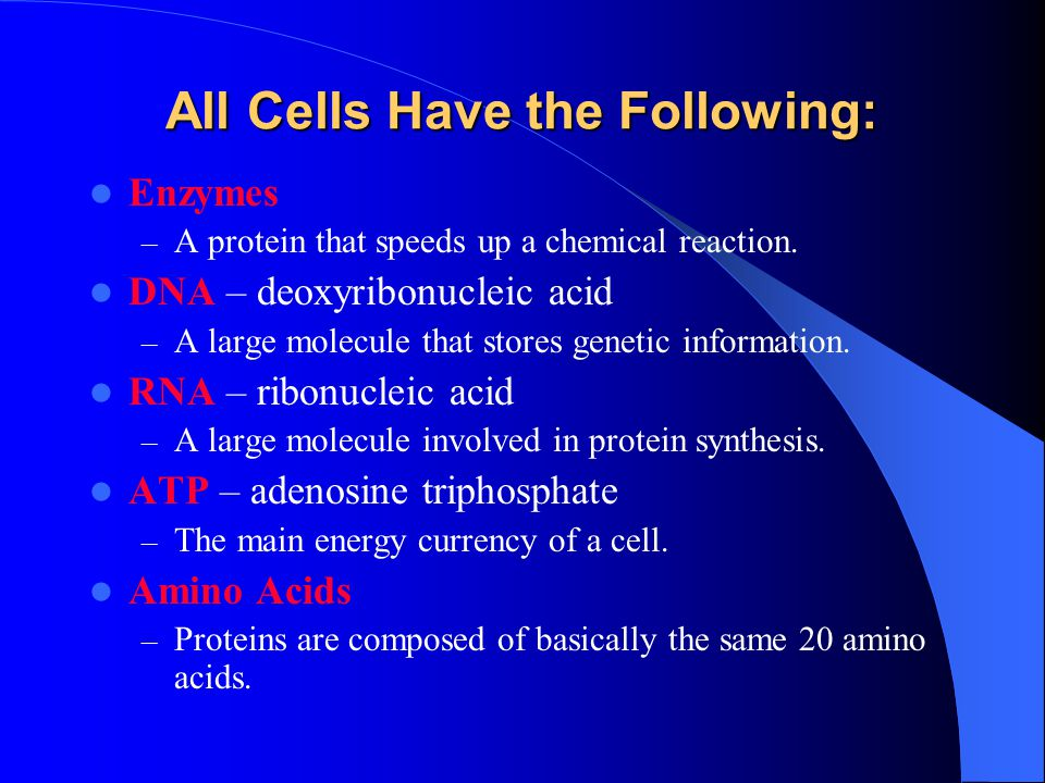 All Cells Have the Following: Enzymes – A protein that speeds up a chemical reaction.