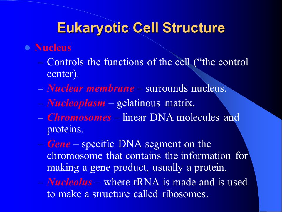 Eukaryotic Cell Structure Nucleus – Controls the functions of the cell ( the control center).