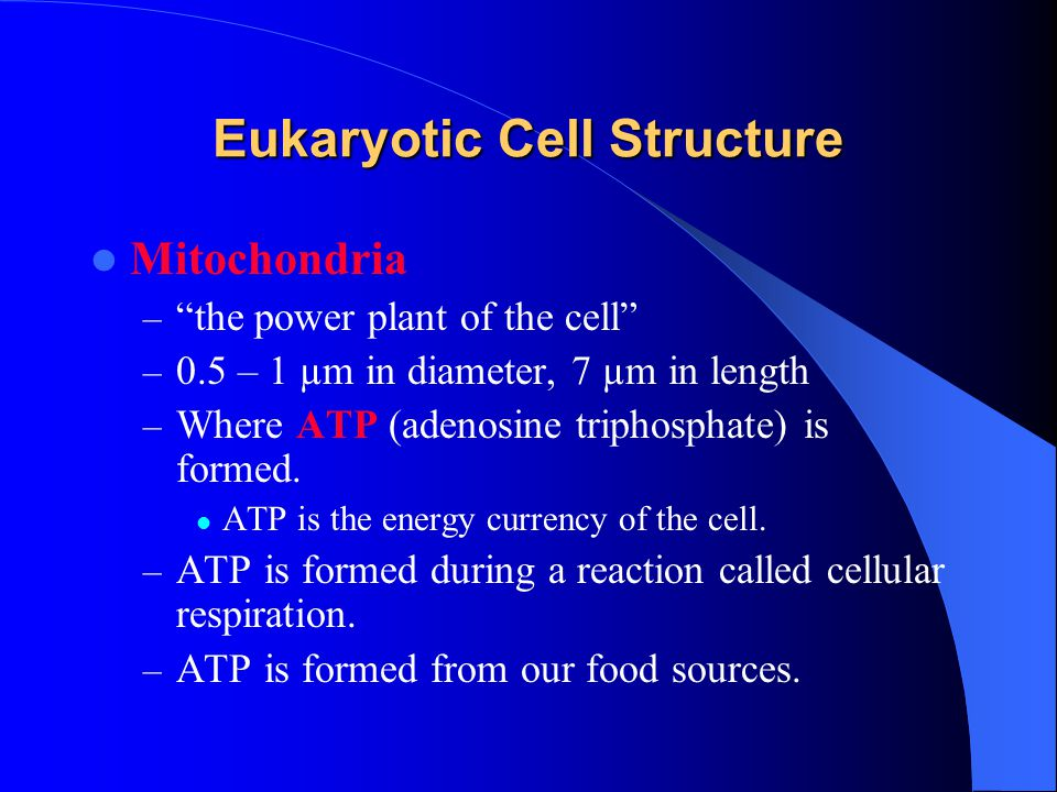 Eukaryotic Cell Structure Mitochondria – the power plant of the cell – 0.5 – 1 µm in diameter, 7 µm in length – Where ATP (adenosine triphosphate) is formed.