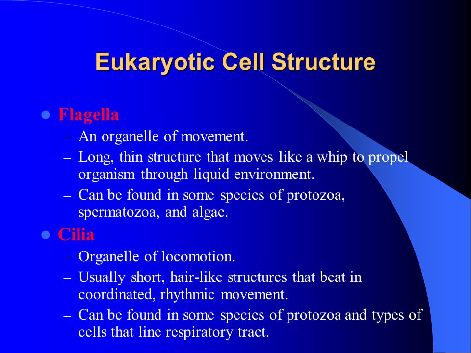 Eukaryotic Cell Structure Flagella – An organelle of movement.