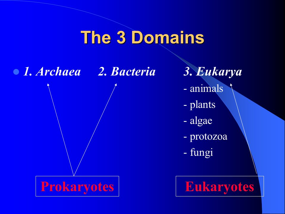 The 3 Domains 1.Archaea2. Bacteria3.