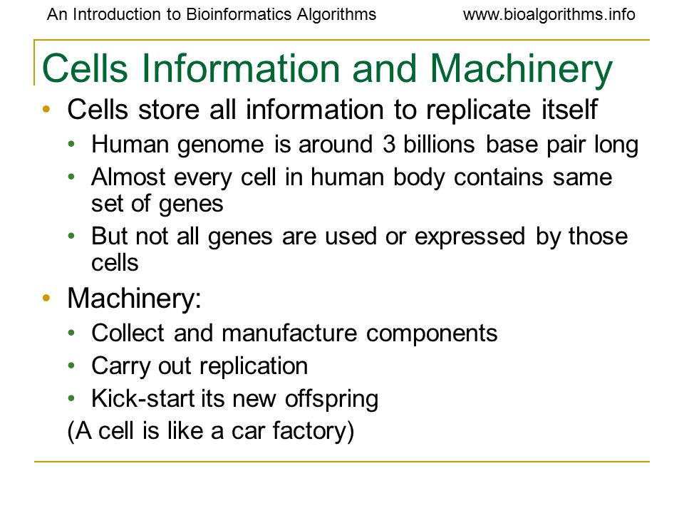 An Introduction to Bioinformatics Algorithmswww.bioalgorithms.info Cells Information and Machinery Cells store all information to replicate itself Human genome is around 3 billions base pair long Almost every cell in human body contains same set of genes But not all genes are used or expressed by those cells Machinery: Collect and manufacture components Carry out replication Kick-start its new offspring (A cell is like a car factory)