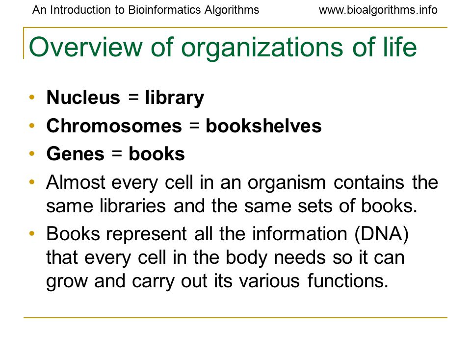 An Introduction to Bioinformatics Algorithmswww.bioalgorithms.info Overview of organizations of life Nucleus = library Chromosomes = bookshelves Genes = books Almost every cell in an organism contains the same libraries and the same sets of books.