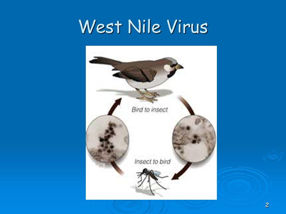 West Nile Virus 2