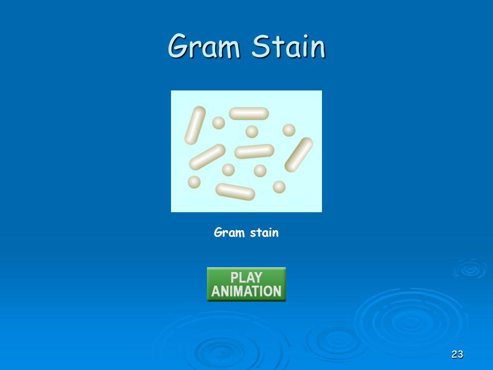Gram stain Gram Stain 23