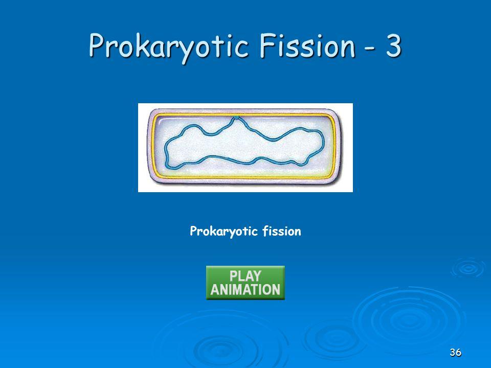 Prokaryotic fission Prokaryotic Fission - 3 36