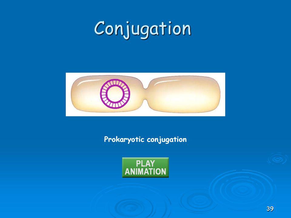 Prokaryotic conjugation Conjugation 39