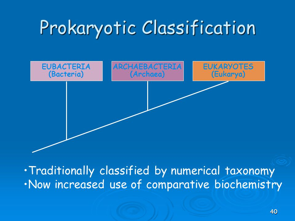 Prokaryotic Classification EUBACTERIA (Bacteria) ARCHAEBACTERIA (Archaea) EUKARYOTES (Eukarya) Traditionally classified by numerical taxonomy Now incr