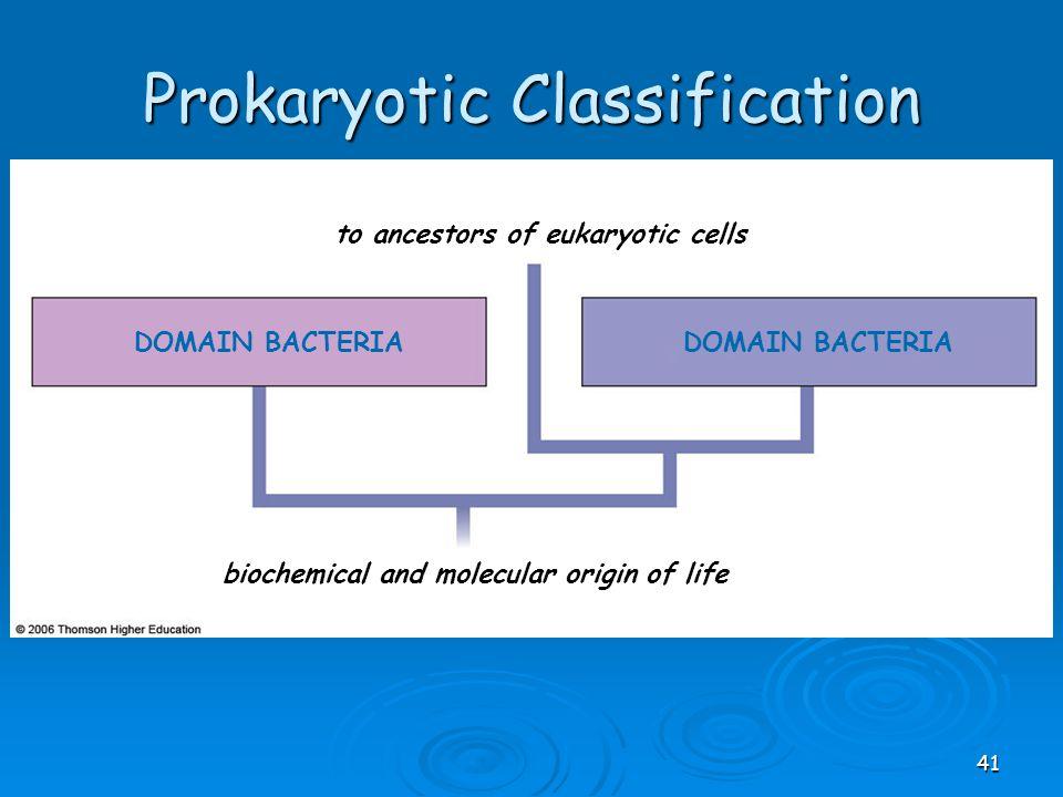 DOMAIN BACTERIA to ancestors of eukaryotic cells biochemical and molecular origin of life Prokaryotic Classification 41