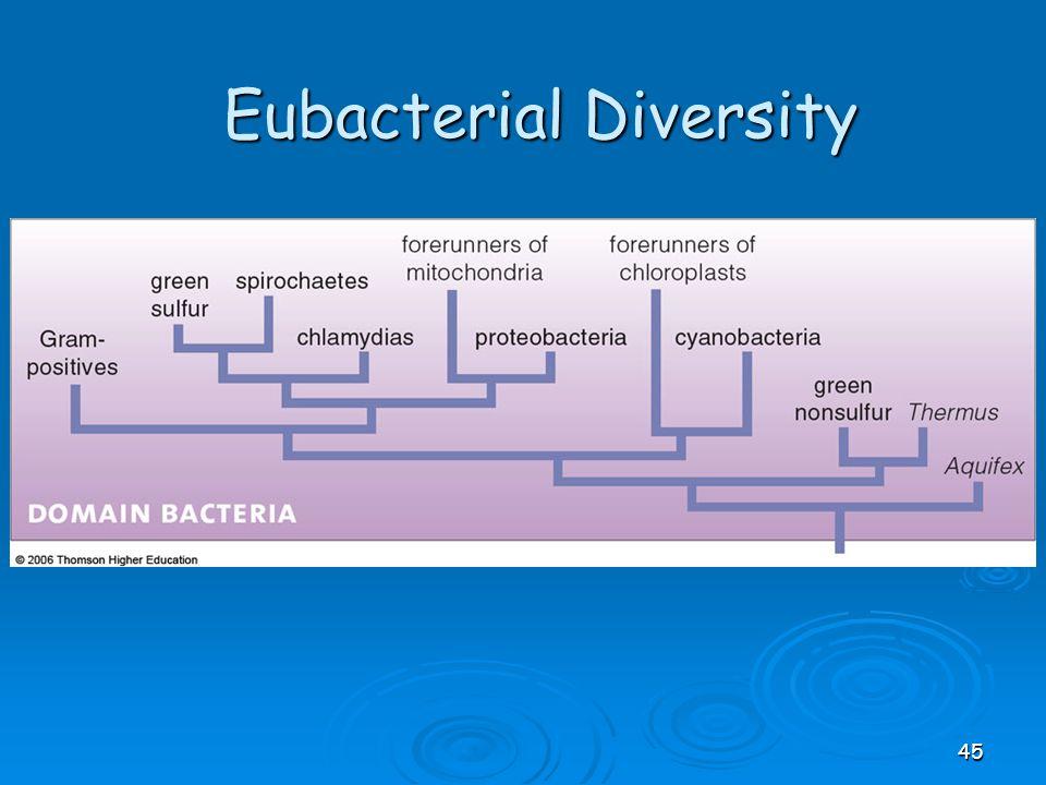 Eubacterial Diversity 45
