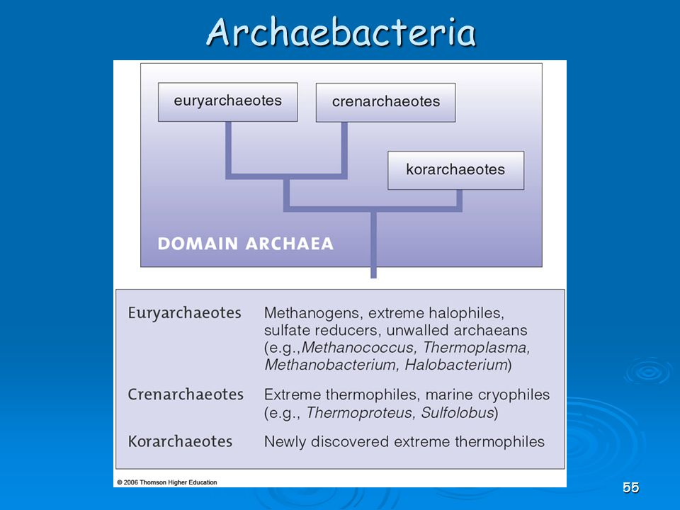 Archaebacteria 55