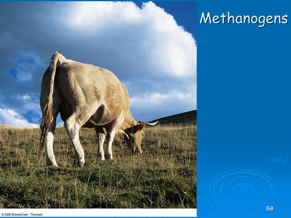 Methanogens 58