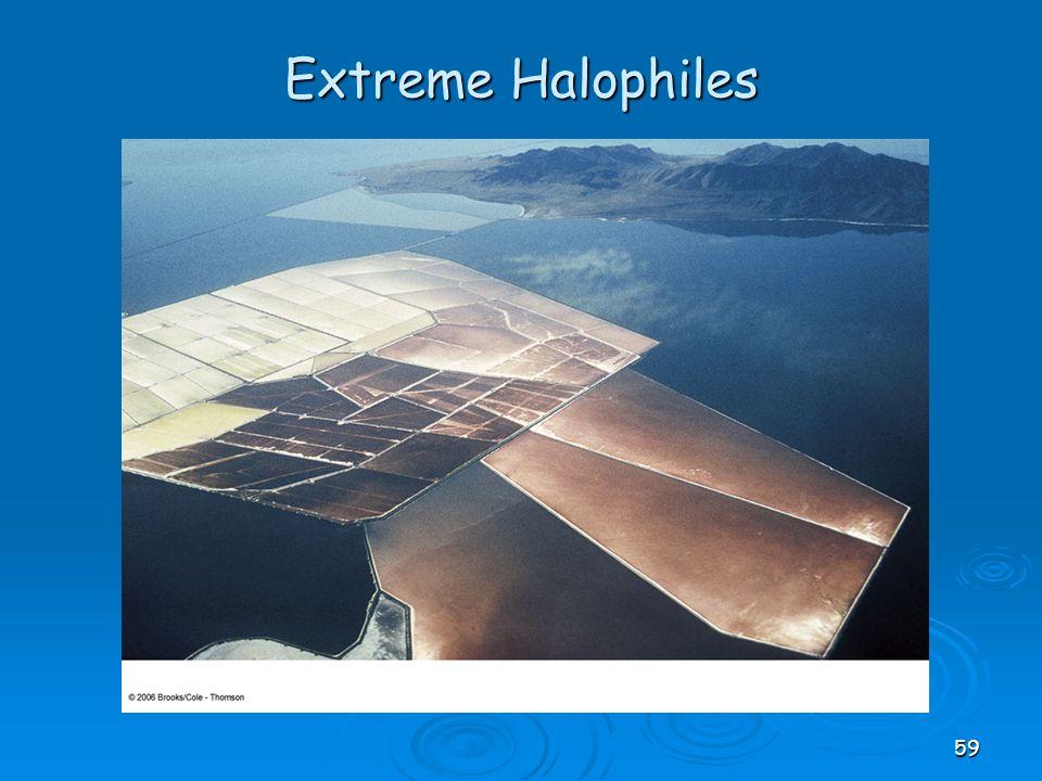Extreme Halophiles 59