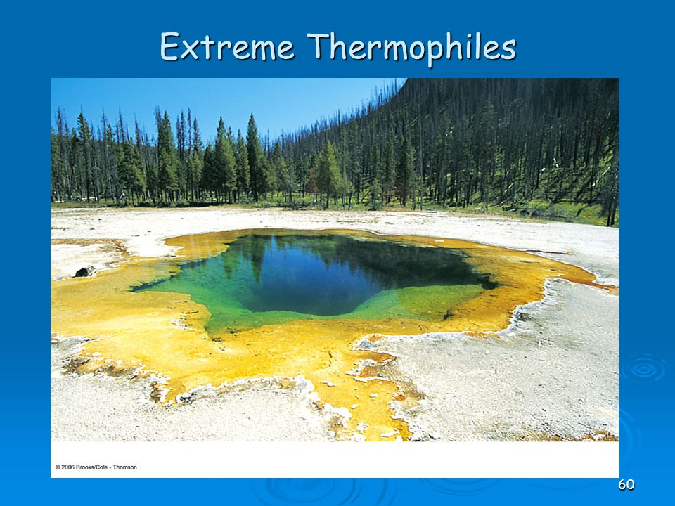 Extreme Thermophiles 60