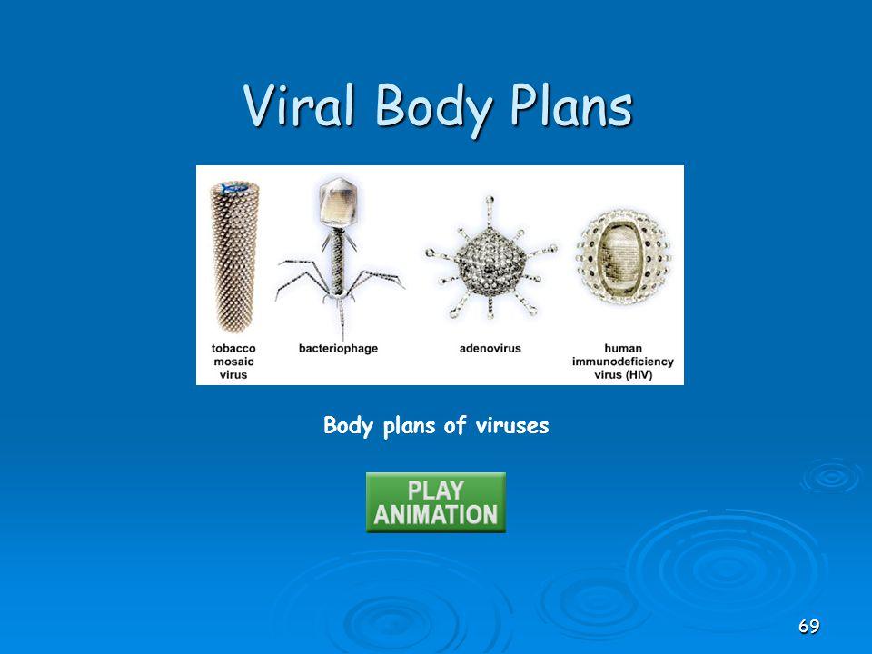 Body plans of viruses Viral Body Plans 69