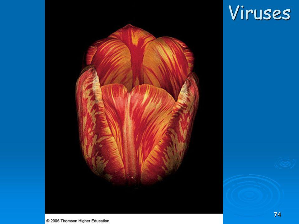 Viruses 74