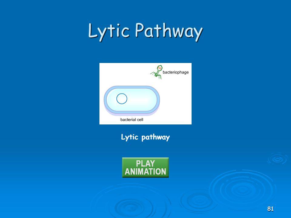 Lytic pathway Lytic Pathway 81