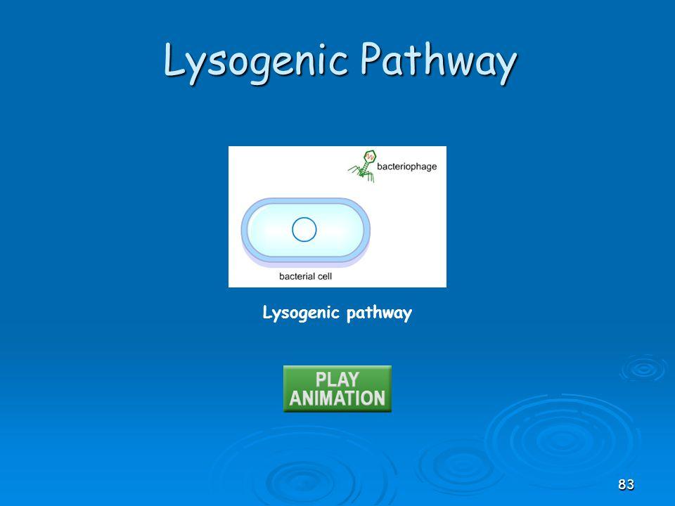 Lysogenic pathway Lysogenic Pathway 83