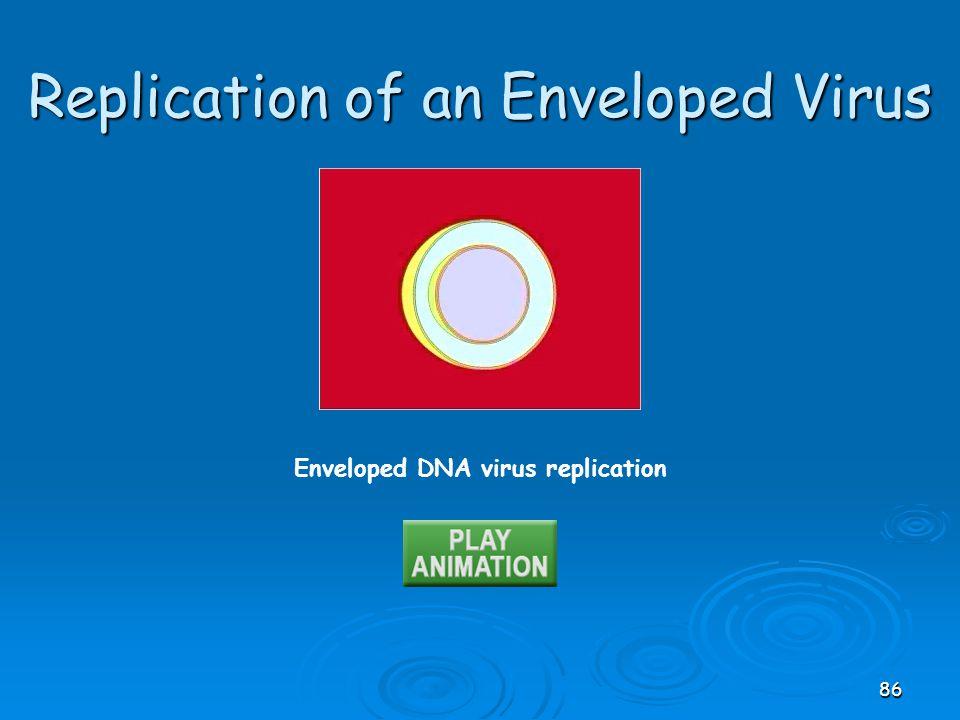 Enveloped DNA virus replication Replication of an Enveloped Virus 86