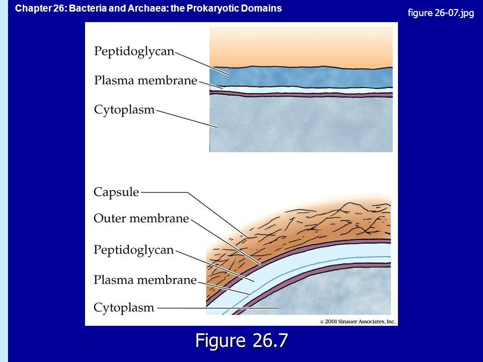 Chapter 26: Bacteria and Archaea: the Prokaryotic Domains Figure 26.7 figure 26-07.jpg