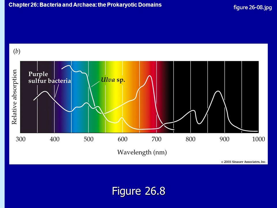 Chapter 26: Bacteria and Archaea: the Prokaryotic Domains Figure 26.8 figure 26-08.jpg