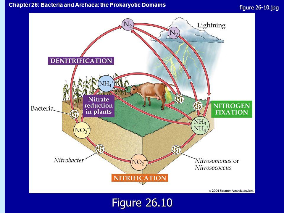 Chapter 26: Bacteria and Archaea: the Prokaryotic Domains Figure 26.10 figure 26-10.jpg