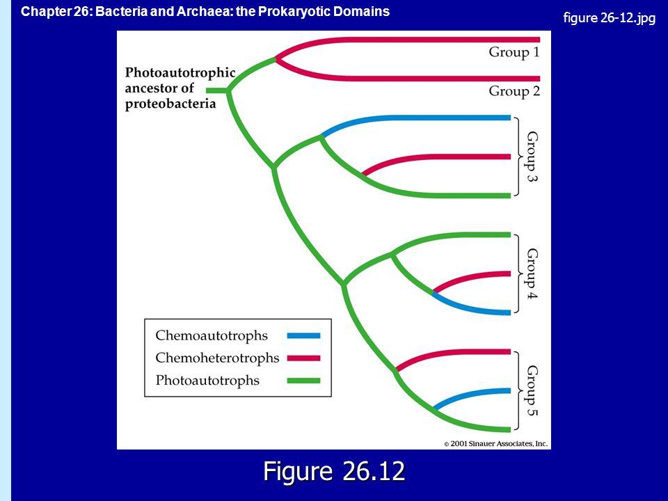 Chapter 26: Bacteria and Archaea: the Prokaryotic Domains Figure 26.12 figure 26-12.jpg