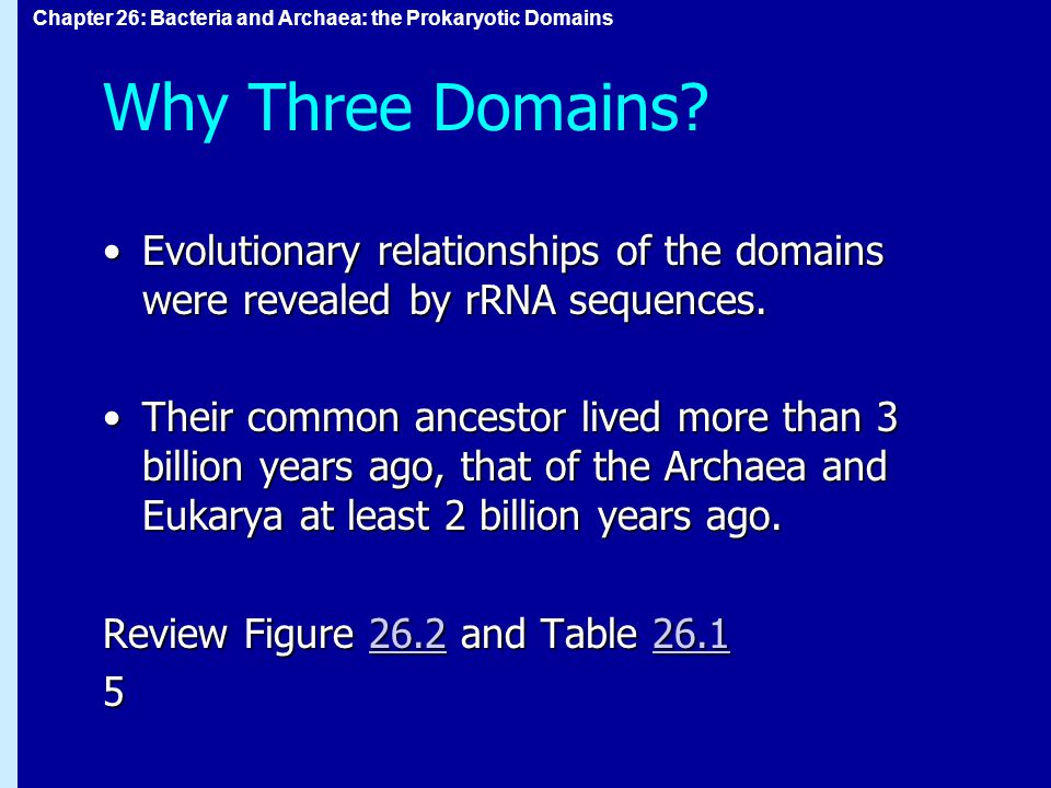 Chapter 26: Bacteria and Archaea: the Prokaryotic Domains Why Three Domains.