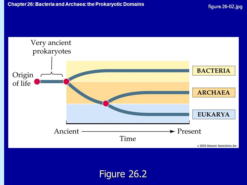 Chapter 26: Bacteria and Archaea: the Prokaryotic Domains Figure 26.2 figure 26-02.jpg