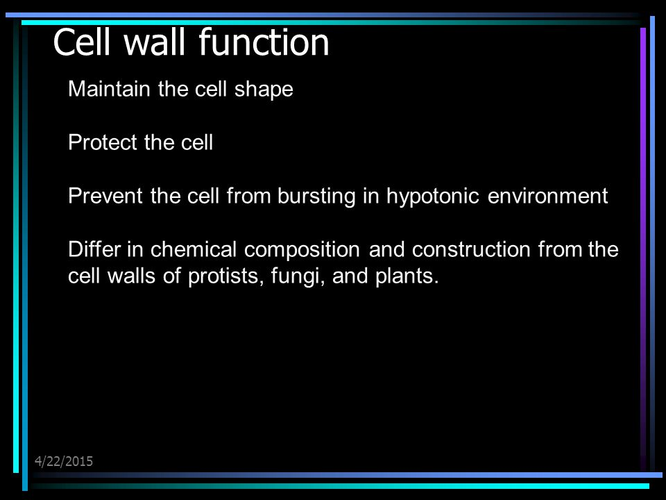 4/22/2015 Cell wall function Maintain the cell shape Protect the cell Prevent the cell from bursting in hypotonic environment Differ in chemical compo