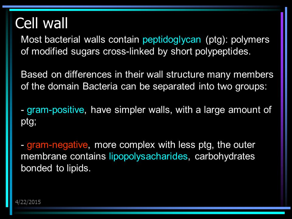 4/22/2015 Cell wall Most bacterial walls contain peptidoglycan (ptg): polymers of modified sugars cross-linked by short polypeptides. Based on differe