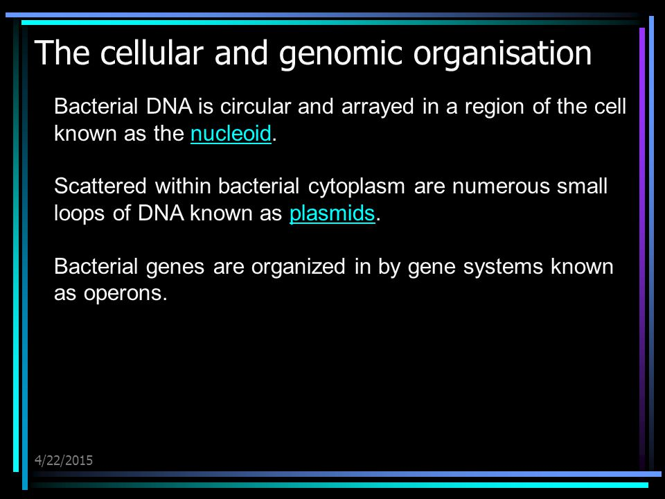 4/22/2015 The cellular and genomic organisation Bacterial DNA is circular and arrayed in a region of the cell known as the nucleoid.nucleoid Scattered
