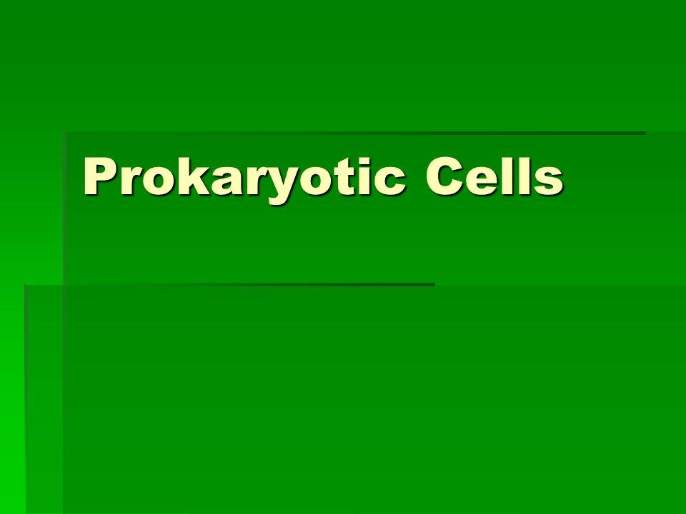 Prokaryotes  PLASMA MEMBRANE  CELL WALL  GLYCOCALYX  CAPSULE  SLIME LAYER  FLAGELLUM  SEX PILUS  FIMBRAE