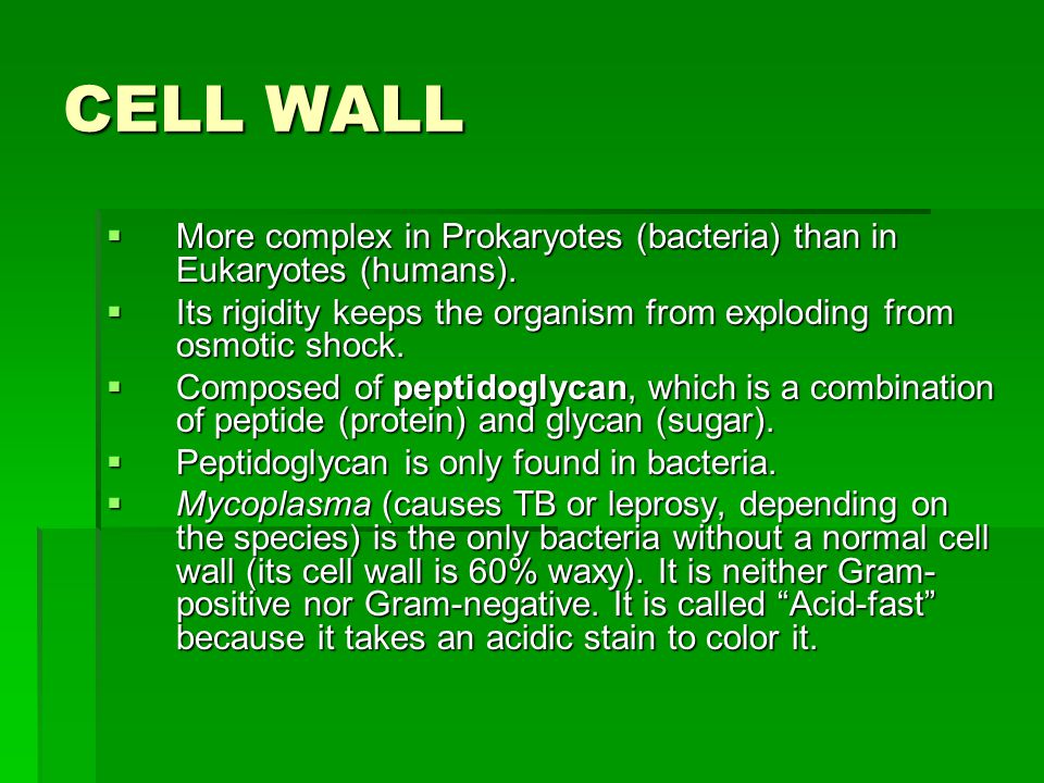 CELL WALL  More complex in Prokaryotes (bacteria) than in Eukaryotes (humans).