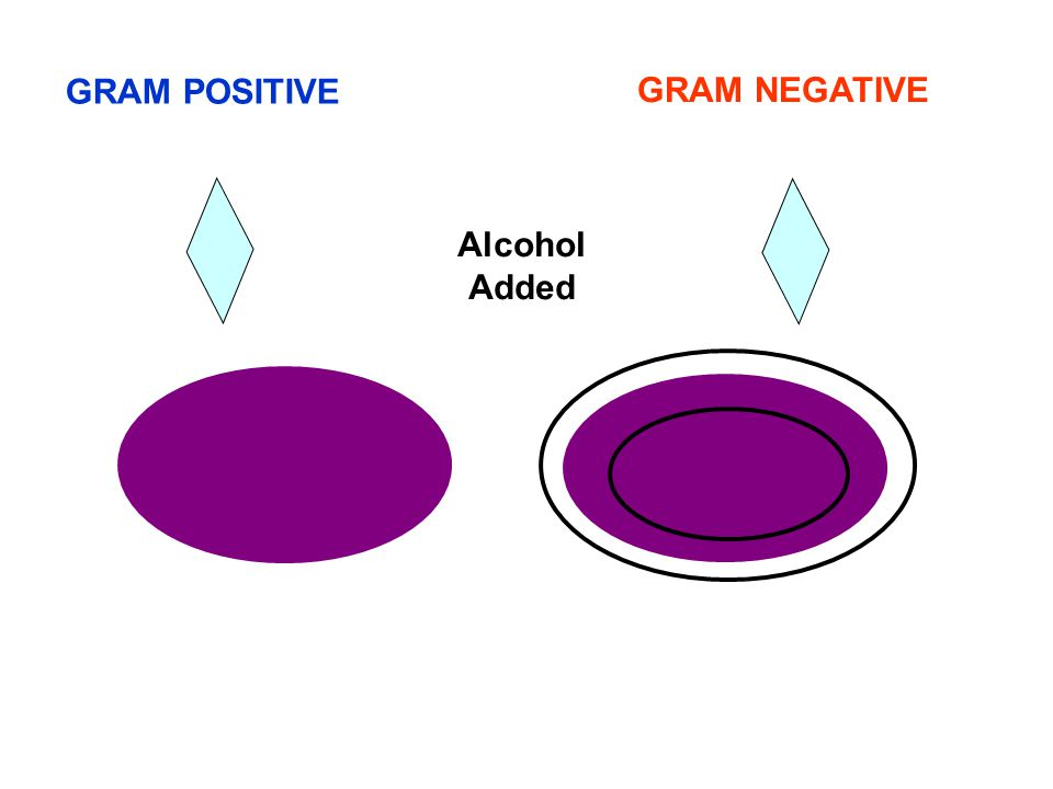 GRAM POSITIVE GRAM NEGATIVE Alcohol Added