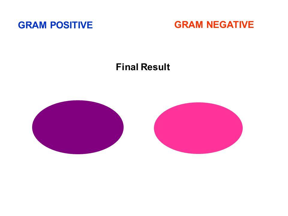 GRAM POSITIVE GRAM NEGATIVE Final Result