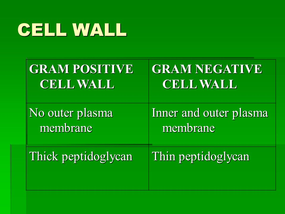 CELL WALL GRAM POSITIVE CELL WALL GRAM NEGATIVE CELL WALL No outer plasma membrane Inner and outer plasma membrane Thick peptidoglycan Thin peptidoglycan