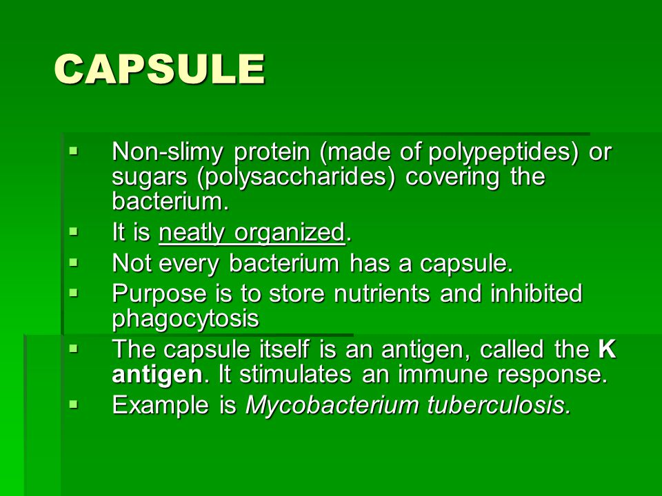 CAPSULE CAPSULE  Non-slimy protein (made of polypeptides) or sugars (polysaccharides) covering the bacterium.