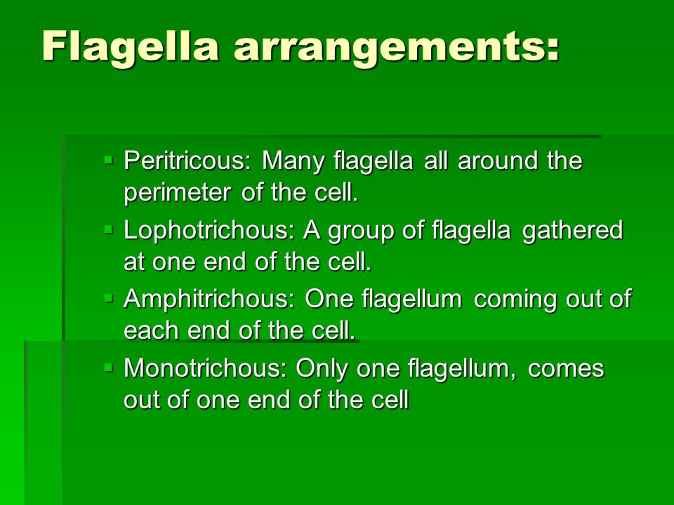 Flagella arrangements:  Peritricous: Many flagella all around the perimeter of the cell.
