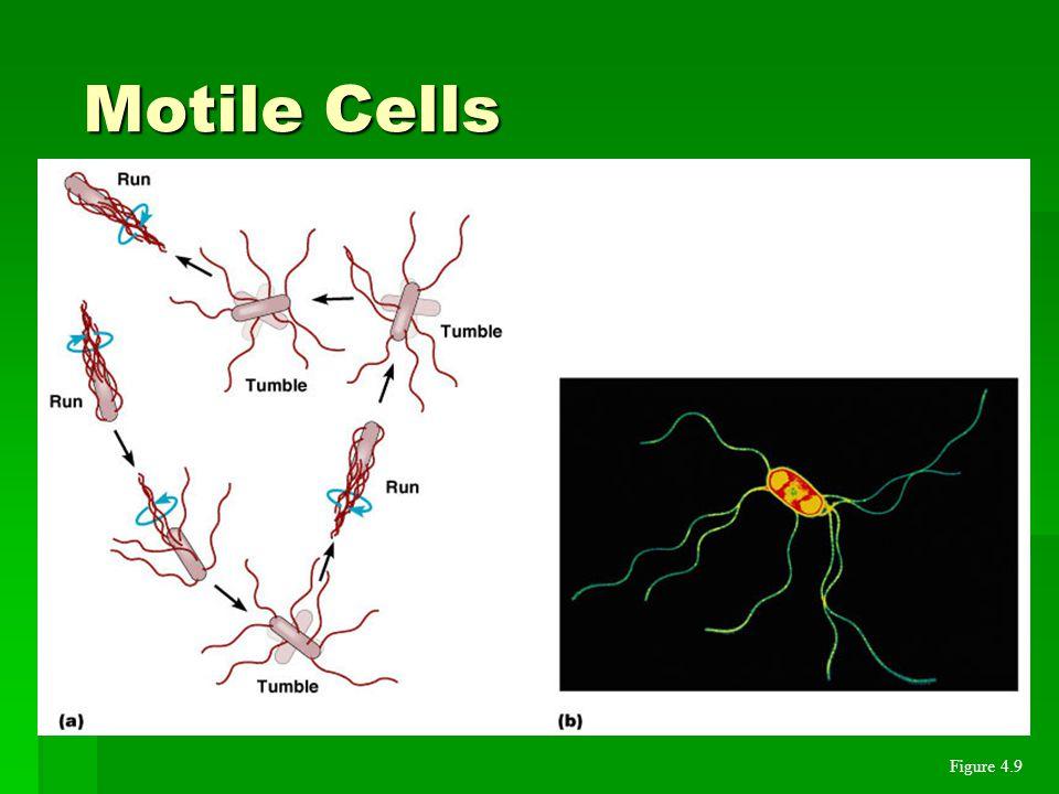 Motile Cells Figure 4.9