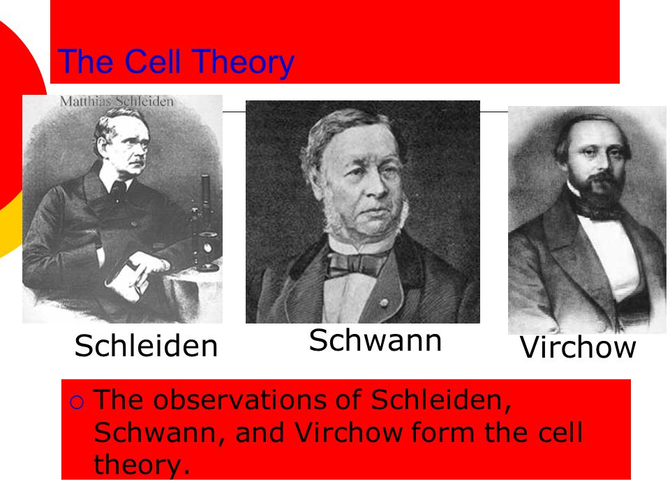 The Cell Theory  The observations of Schleiden, Schwann, and Virchow form the cell theory. Schleiden Schwann Virchow